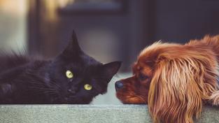 Srde Hund Katze Und Co Richtig Versichern
