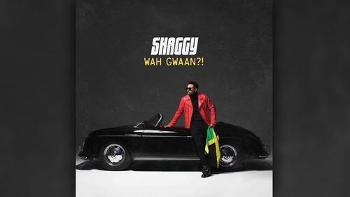 Shaggy Wah Gwaan?!