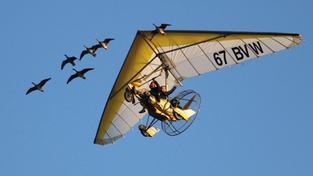 new product b64e2 a32a1 SR.de: Frei wie ein Vogel
